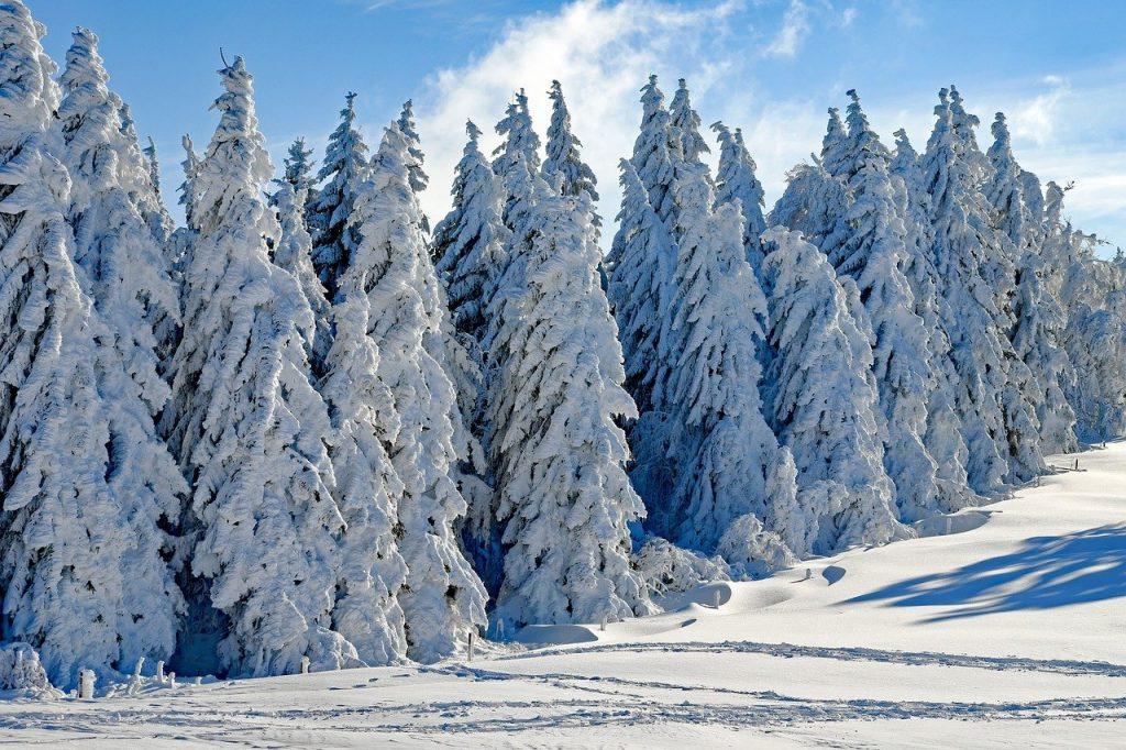 wintry, snow, firs-2993370.jpg